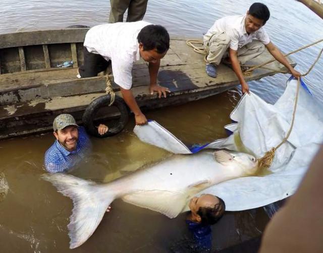 Freshwater megafauna populations declining globally