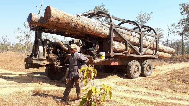 Forest Activists: Government Reluctant to Preserve Cambodia's Forests