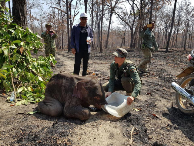 Lost baby elephant rescued