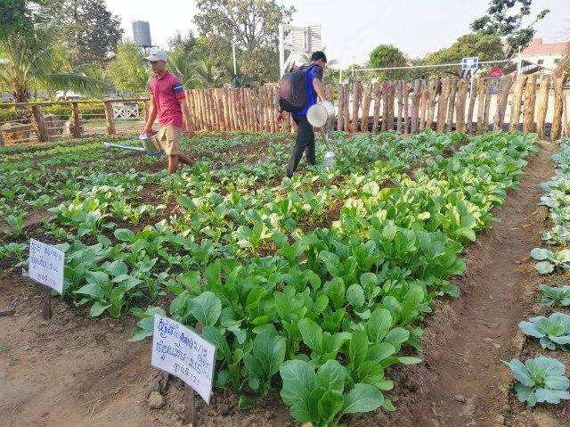 School Hopes to Improve Facilities by Selling Vegetables