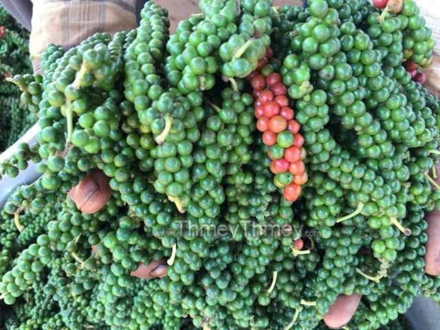 COVID-19 hurts Cambodia's export of famous Kampot pepper