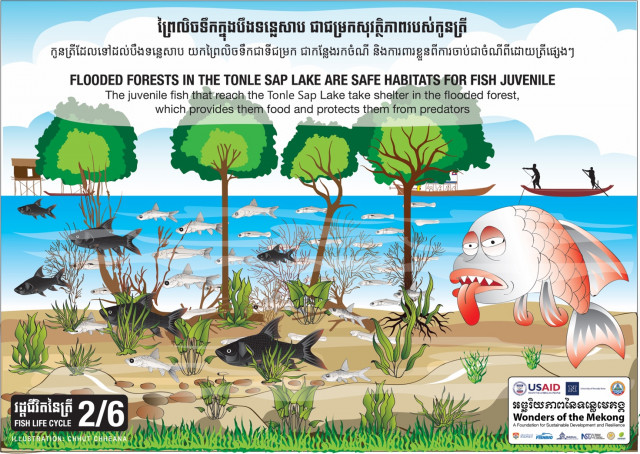 Healthy Forests, Healthy Lake