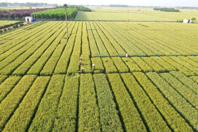 World food prices rise for first time in 2020, pushed by prices for vegetable oils, sugar