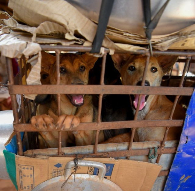 Cambodia's Dog Meat Ban: What Can We All Do Next to Help?
