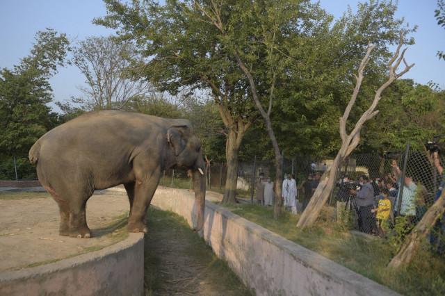 Kaavan the Elephant to Relocate to Cambodia Wildlife Sanctuary This Year