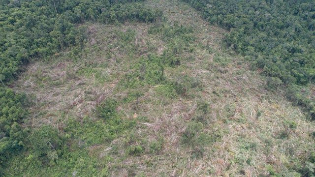 Prey Lang Forest Has Been Reduced by Nearly a Quarter over the Last 20 Years