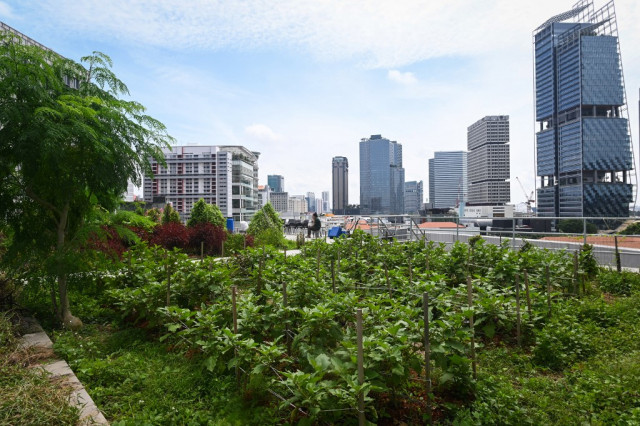 Green shoots: Rooftop farming takes off in Singapore