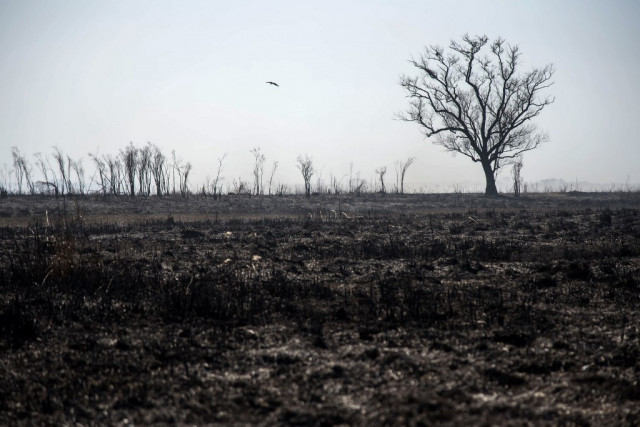 Climate change bigger threat than Covid: Red Cross