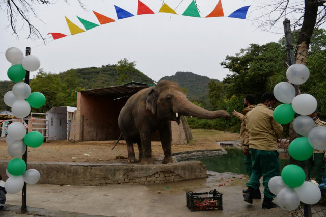 Pakistan's lonely elephant Kaavan packs trunk for Cambodia