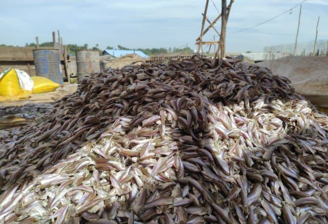 The Price of Fish for Prahok Has Gone Up this Year due to a Smaller Fish Catch