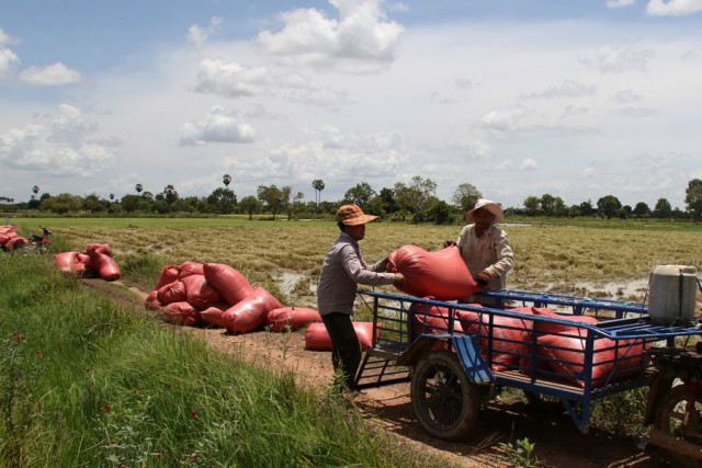 Cambodia's milled rice export to China up 16.6 pct last year: agriculture minister