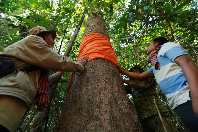 Environment Ministry Prohibits Local Community from Holding Prey Lang Ordination Ceremony