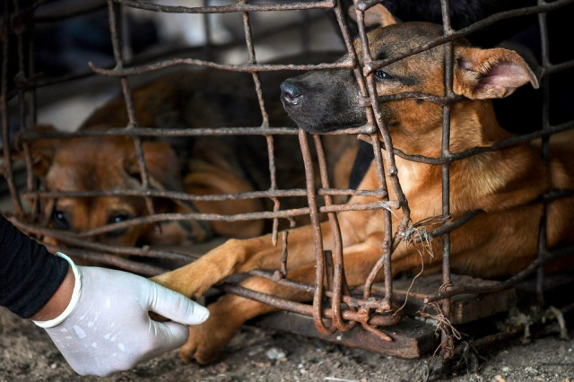 Cambodian dog slaughterhouse shuts as meat trade faces pressure