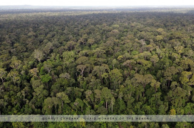 Government under Fire as Deforestation Continues Unabated in Prey Lang