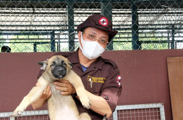 Sniffer Dogs Trained For COVID Detection