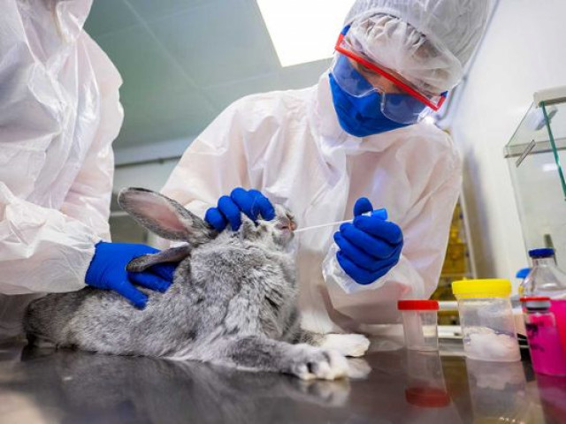 Russia registers 'world's first' Covid vaccine for animals