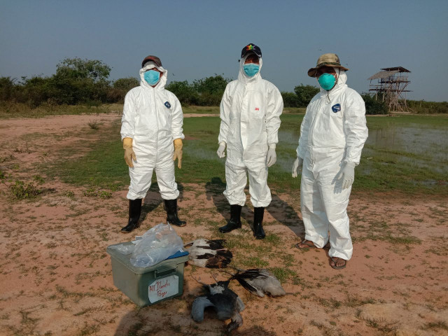 More than 1,700 Wild Birds Died of Bird Flu in Prey Veng