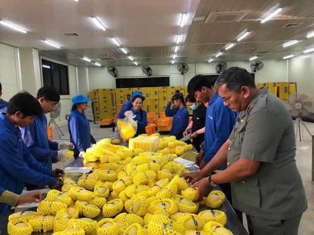 Cambodia expresses gratitude to China for formally approving export of fresh mangoes