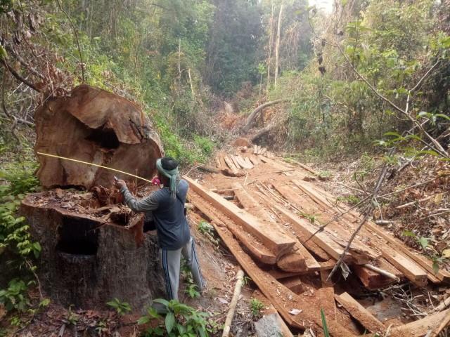 Study Finds Illegal Logging Rampant in Preah Roka Wildlife Sanctuary