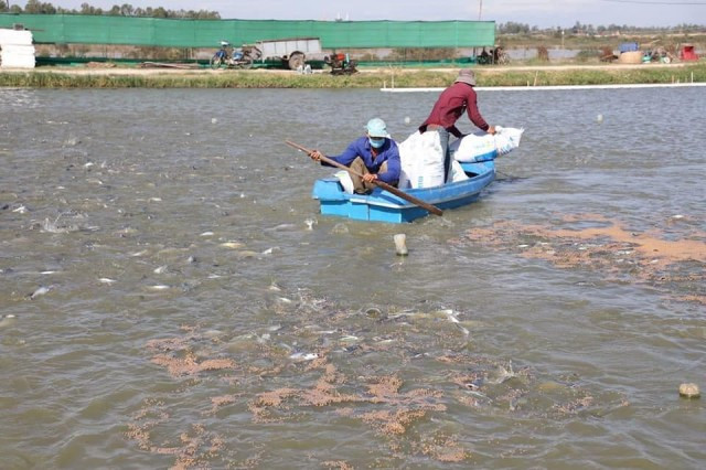 Fish Farmer Suspends Operation as Imports Dominate Market