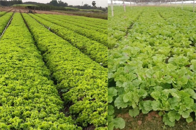Agriculture Products Markets Recover but Prices Low