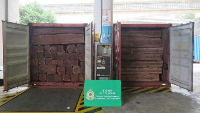 Authorities Probe Illegal Timber Export