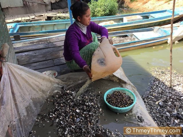 Floating Village Residents Quit Fishing to Forage for Clams as Water Drops at Tonle Sap Lake