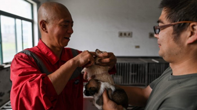 Chinese monk who saved 8,000 strays is dog's best friend