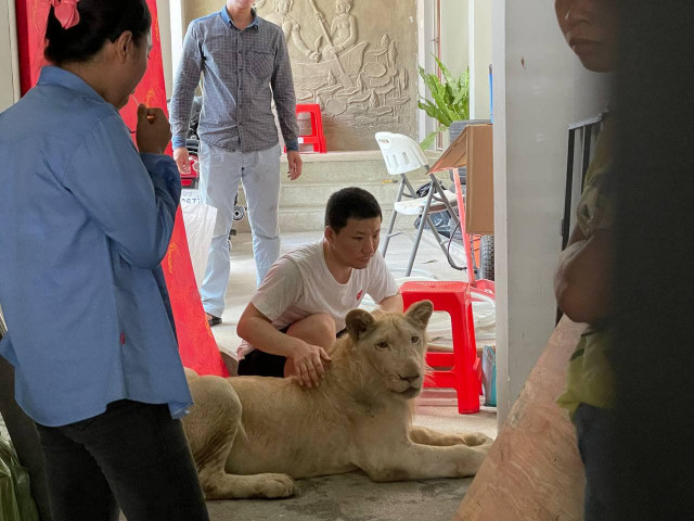 Chinese Man Fined $30,000 for Keeping Illegal Pet Lion