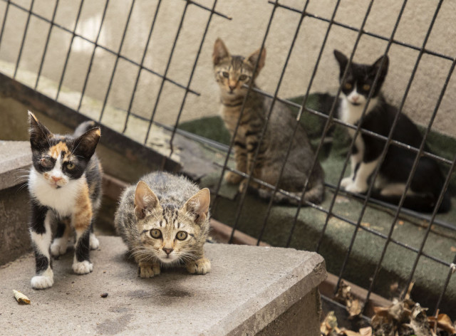 Turkey passes new law to protect animals