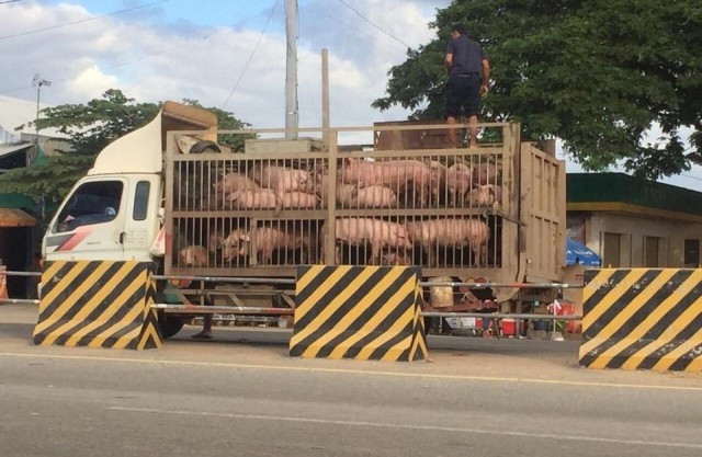 """Cambodian Pig Farmers Fear """"Excessive"""" Imports from Thailand"""