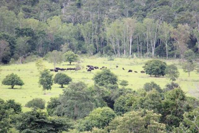 Thailand forest park gets World Heritage nod despite indigenous rights warning