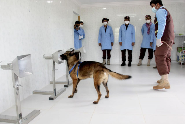 Cambodian Dogs Trained to Detect COVID