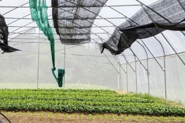 A Vegetable Farmer Group Sees Dramatic Decline in Sales Due to the Prolonged Pandemic