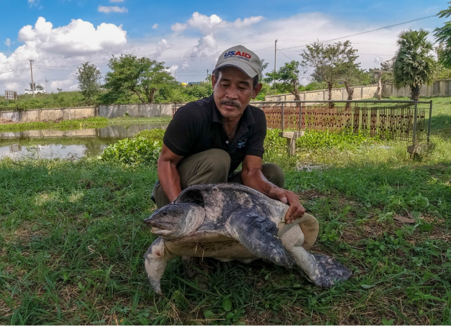 Fisherman Hands Over a Large Asiatic Soft-shell Turtle for Conservation