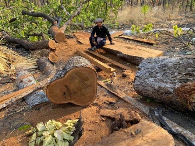 Royal Academy Head Says Wealthy People Behind Surge in Illegal Logging in Techo Sen Park