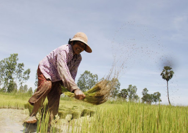 Cambodia's agricultural exports up 88 pct in first 9 months this year: minister