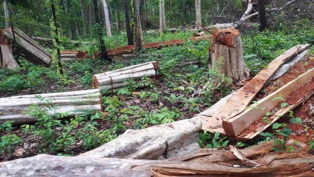 Amnesty Condemns Forest Activist Conviction
