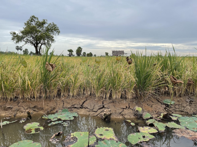 Cambodia Loses More Than $100 million due to Droughts
