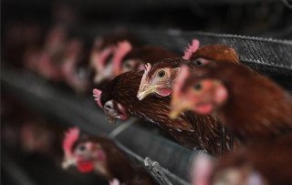 Bird flu: outbreak of highly pathogenic H5N6 virus