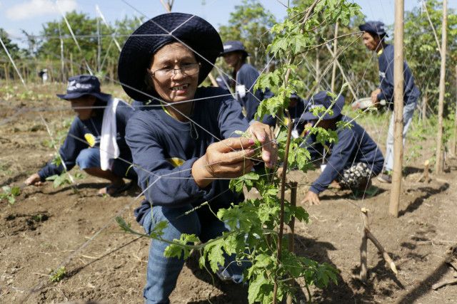 Disaster-resilient farming practices seen boosting gains