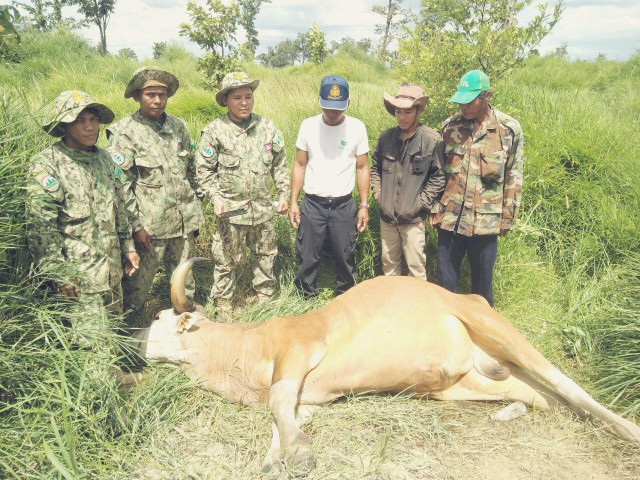 Endangered banteng found dead in Oddar Meanchey