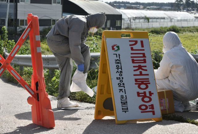 Seoul confirms 4th swine fever case, asks Pyongyang for cooperation