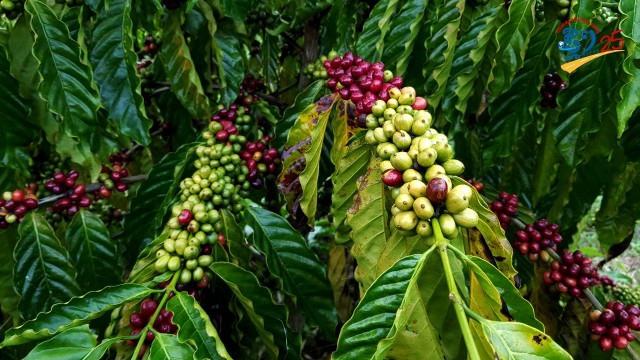 Mondulkiri: A Revolution in Organic Agriculture