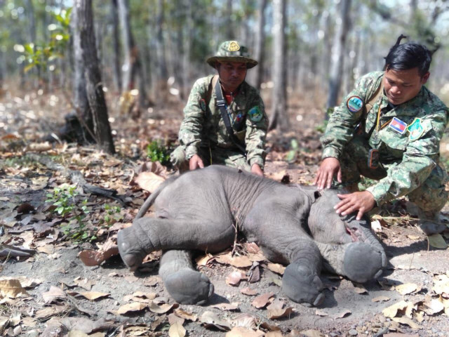Baby Elephant Found Dead
