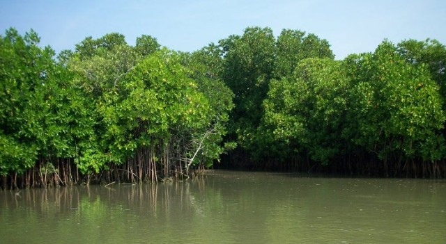 Letter to a Mangrove Eater Who Has Just Dirt on his Brain