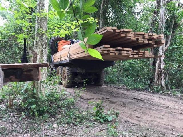 Activists Warn of Illegal Deforestation in Pursat Province