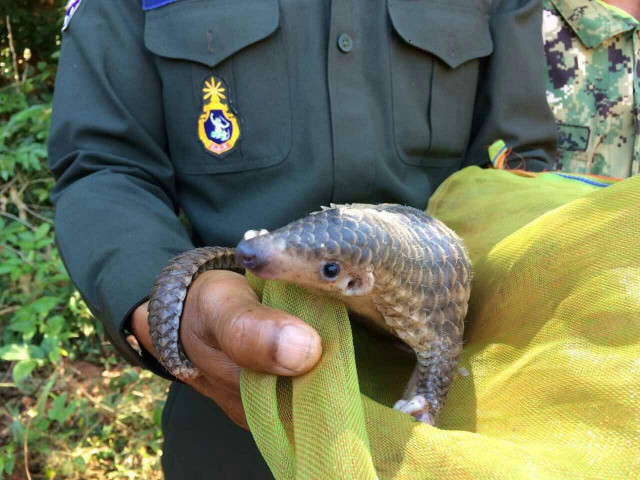Wildlife Poaching Continues in Spite of COVID-19