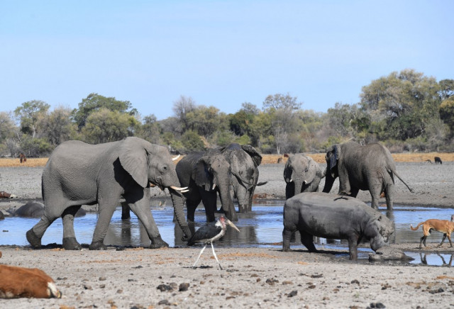 Botswana probes mysterious death of 12 elephants