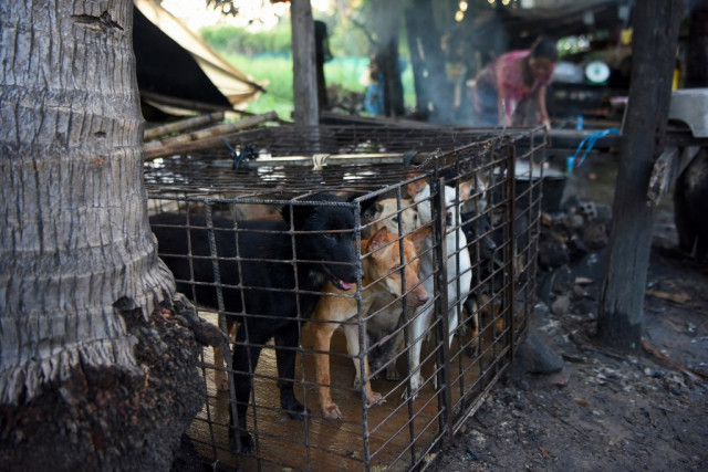 An Animal Welfare NGO Calls on the Public to Ask for an End to Dog Meat Trade